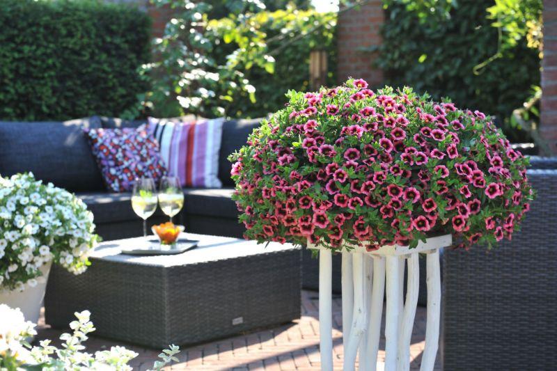 zaubergl ckchen f r balkon und terrasse pflegeleichte bl tenpracht von mai bis oktober. Black Bedroom Furniture Sets. Home Design Ideas