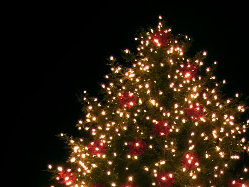 Den richtigen weihnachtsbaum kaufen acht beliebte arten for Weihnachtsbaum arten