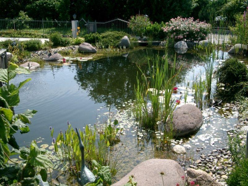 Gartenteiche biotope der freude for Teich gestaltungsideen