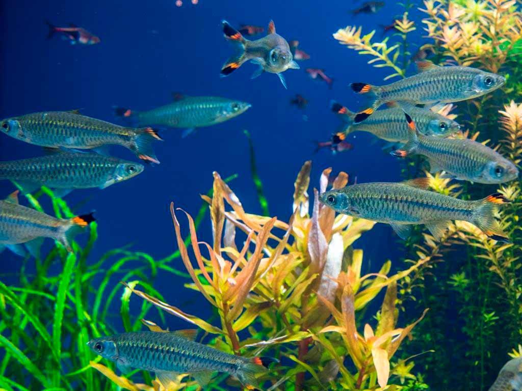 Wer schwimmt denn da: Fische copyright: Envato / pazham