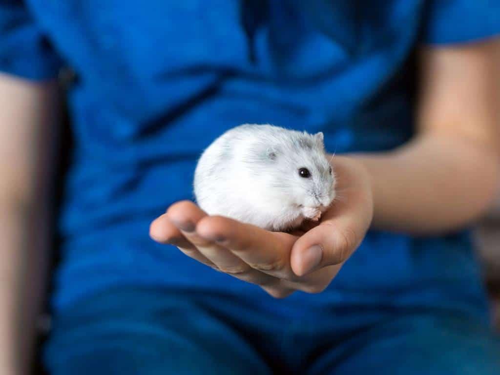 Gehören nicht ins Kinderzimmer: Hamster copyright: Envato / fotyma