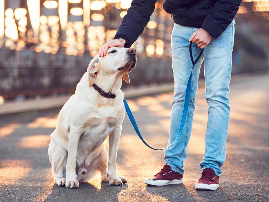 Der beste Freund des Menschen: Hunde