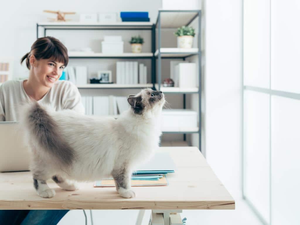 Das beliebteste Haustier der Deutschen: Katze copyright: Envato / stokkete