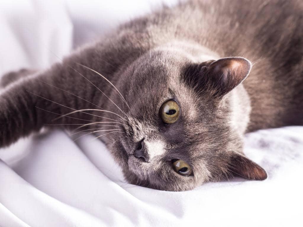 Alles für die Katz: Am 8. August ist Internationaler Katzentag copyright: CityNEWS