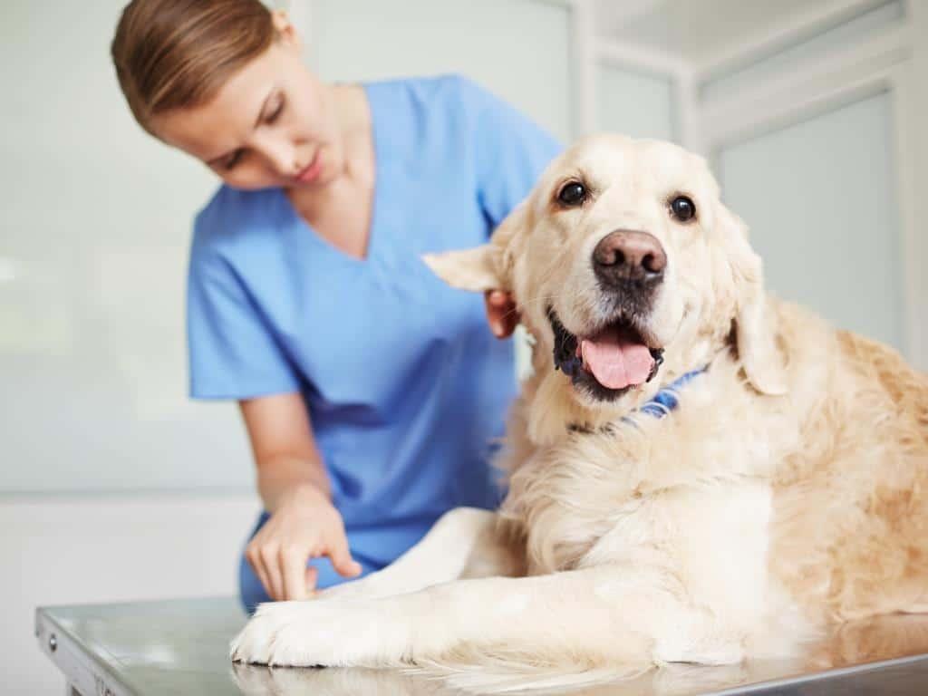 Krankheiten und Hygiene bei Haustieren