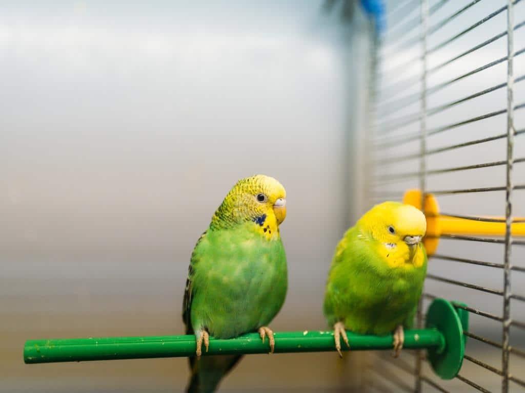 Gefiederte Freunde: Vögel copyright: Envato / NomadSoul1