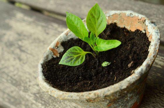 Reiche Ernte auf dem Balkon: Obst, Gemüse und Kräuter wachsen auch in Töpfen und Kübeln - copyright: pixabay.com