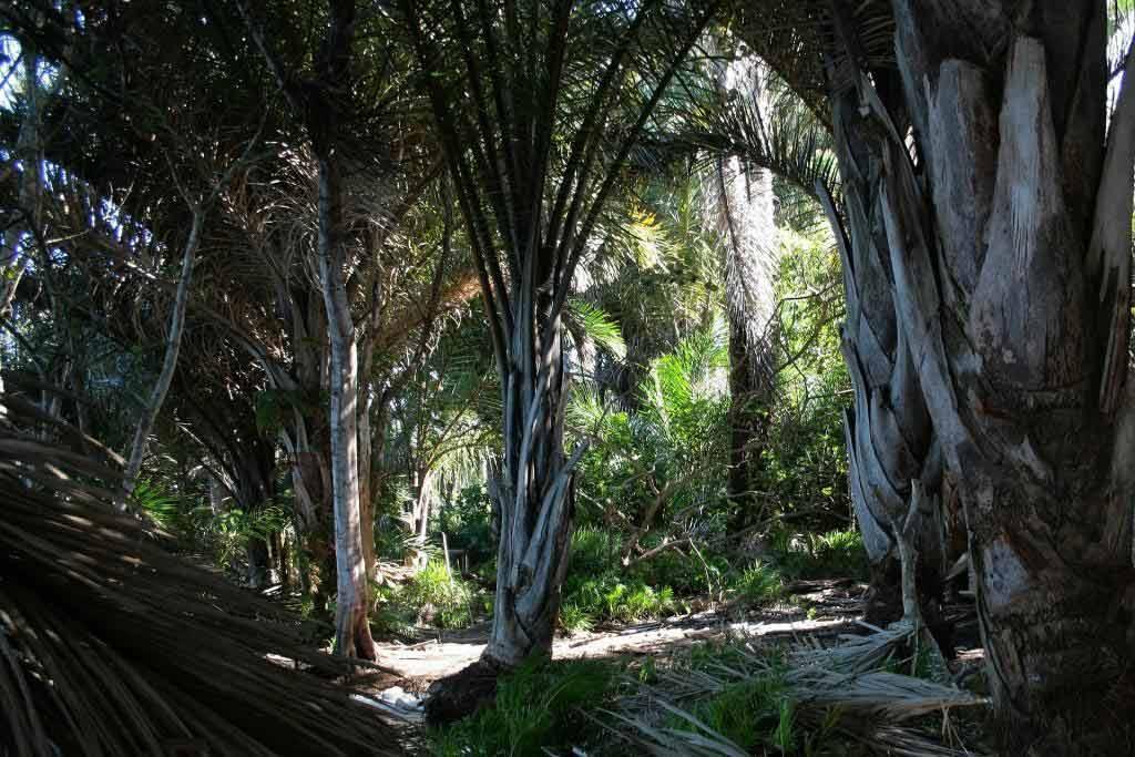 Zu Fuß durch den Regenwald von St. Lucia copyright: pixabay.com