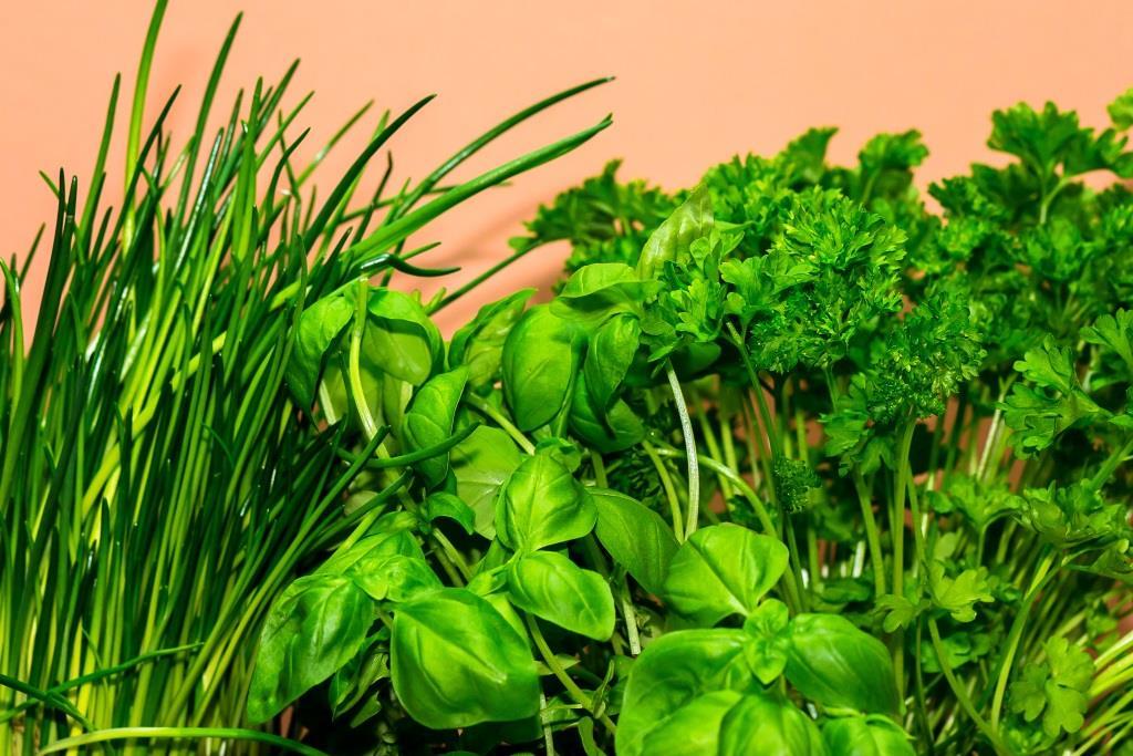Mit Bio-Kräutern auf Balkonien gesund in den Frühling starten - copyright: pixabay.com