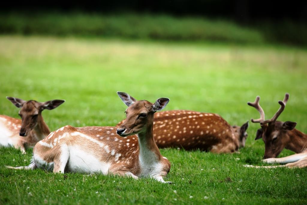 Lohnenswert ist beispielsweise immer wieder ein Besuch im Tierpark Lindenthal. copyright: Alex Weis / CityNEWS