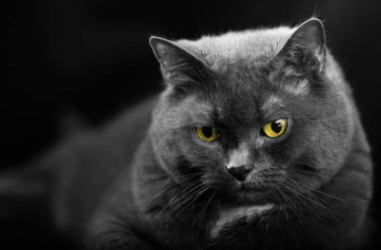 Am 8. August ist Internationaler Katzentag. copyright: CityNEWS