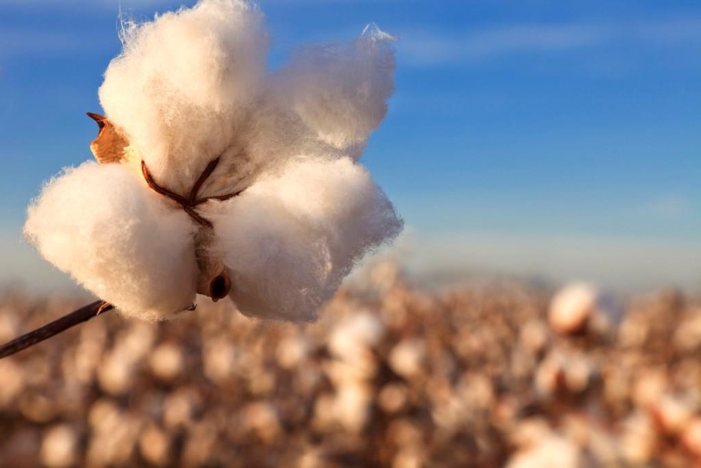 In punkto Nachhaltigkeit werden die Anbaupraktiken in den USA fortwährend optimiert. Foto: djd/COTTON USA