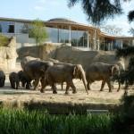 VRS-Kindertage vom 1. bis 3. Oktober 2016: Drei Tage freier Eintritt in den Kölner Zoo für alle Kinder bis einschließlich 12 Jahre - copyright: Kölner Zoo / Rolf Schlosser