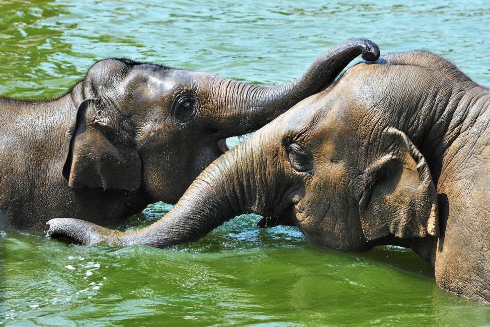 Elefantentag im Kölner Zoo copyright: Rolf Schlosser