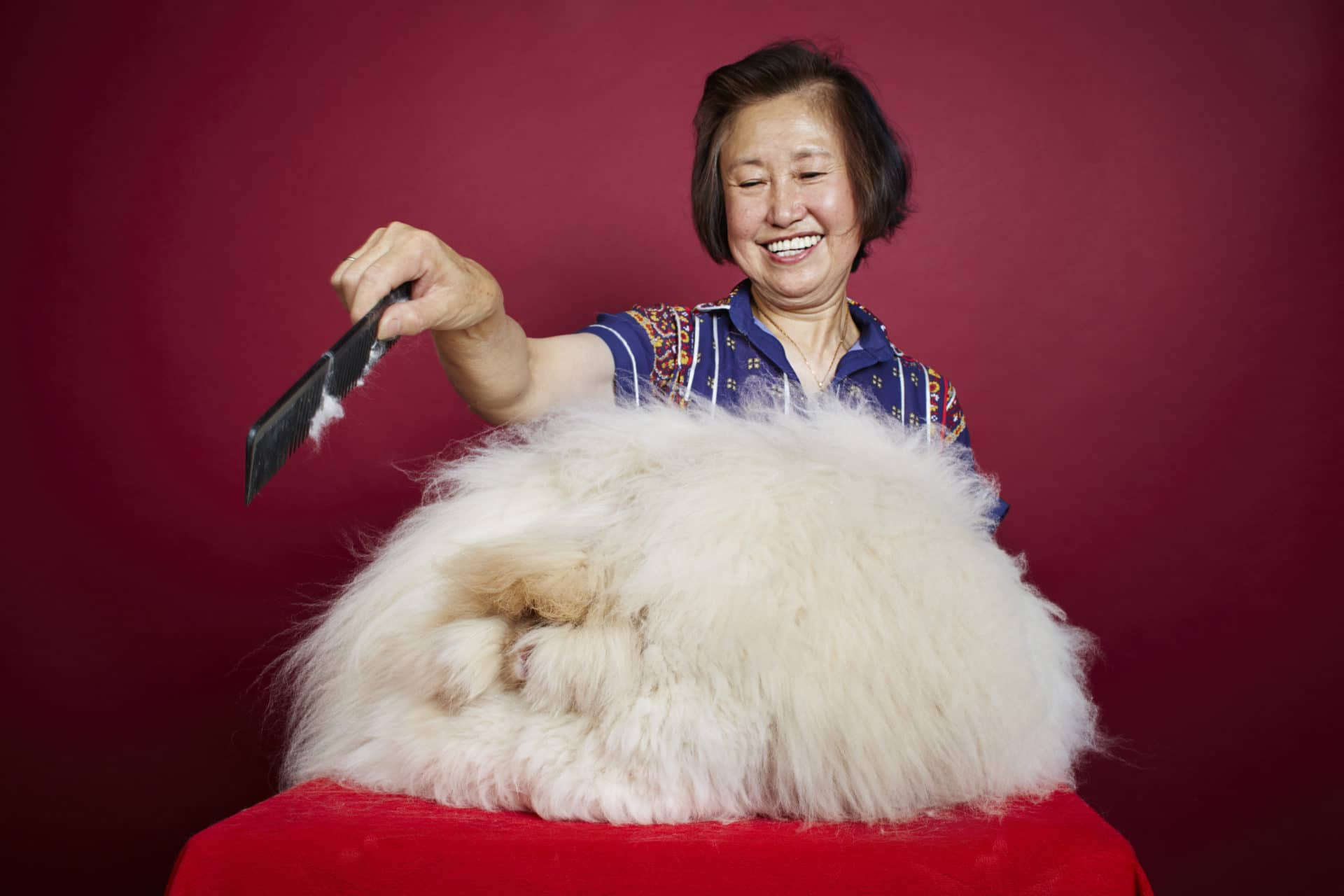 Längstes Fell eines Kaninchens copyright: James Ellerker / Guinness World Records Also Pictured: Owner Betty Chu
