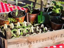 Alles beginnt mit einem Saatkorn - Gemüse vorziehen leicht gemacht! copyright: meine ernte
