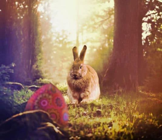 Ach du dickes Ei! Kunterbunte und skurrile Rekorde zu Ostern copyright: pixabay.com