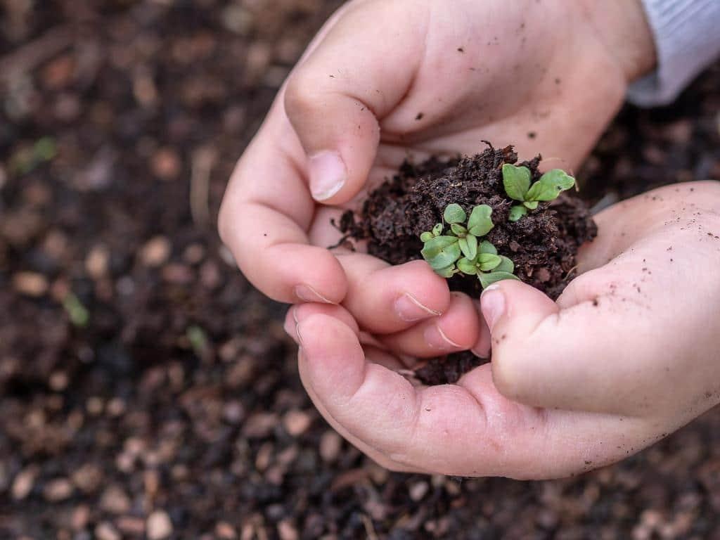 Der perfekte Start zum Gemüse vorziehen copyright: pixabay.com
