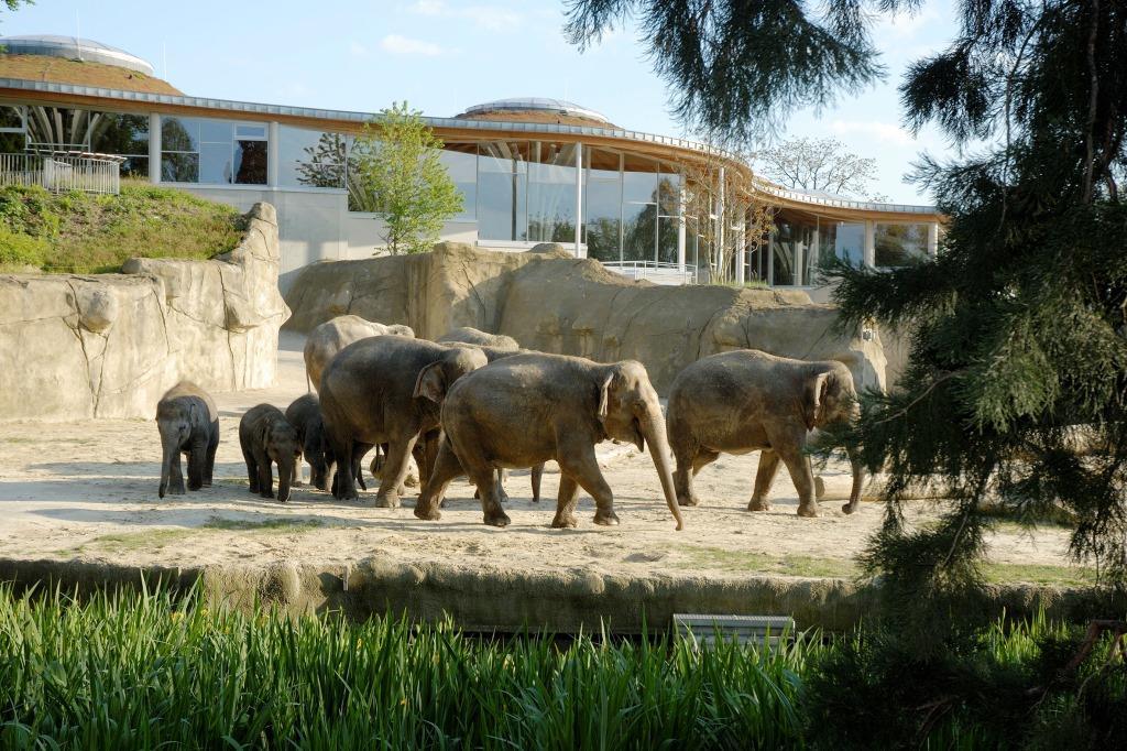 Kölner Zoo und weitere regionale Unternehmen durch Landesumweltminister Johannes Remmel und Bürgermeister Andreas Wolter ausgezeichnet copyright: Kölner Zoo