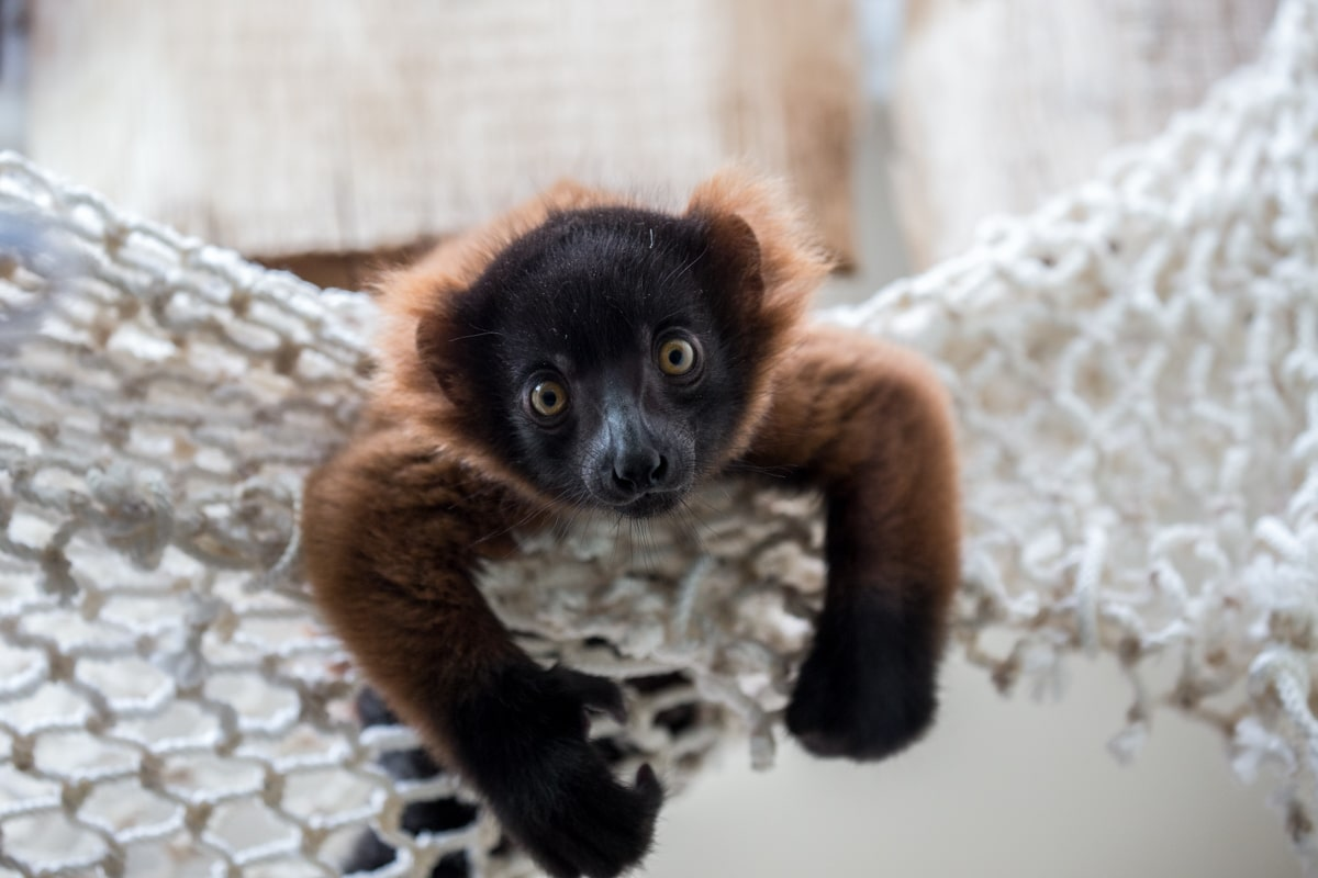 Der Kölner Zoo hat noch keine Namen vergeben. copyright: Kölner Zoo