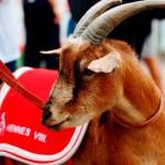 1. FC Köln beginnt mit Heimspiel gegen Darmstadt 98: Hier der komplette Spielplan der Geißböcke copyright: Alex / CityNEWS