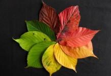 Trendfarben für den Herbst 2016: Von Puder bis Bordeaux copyright: pixabay.com