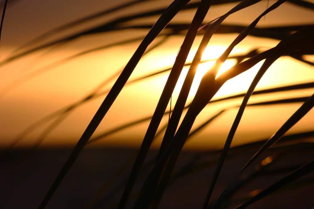 Zwischen Palmen und karibischen Sand copyright: pixabay.com