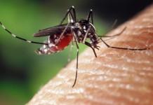 Invasion der blutsaugenden Plagegeistern:Was hilft gegen Mücken, Zecken und Co.? copyright: pixabay.com
