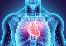 Wie man eine Herzrhythmusstörung erkennt, wie sie behandelt wird und wo Betroffene individuelle Beratung und Unterstützung erhalten, dazu informierten die Experten am Lesertelefon. - copyright: yodiyim / fotolia
