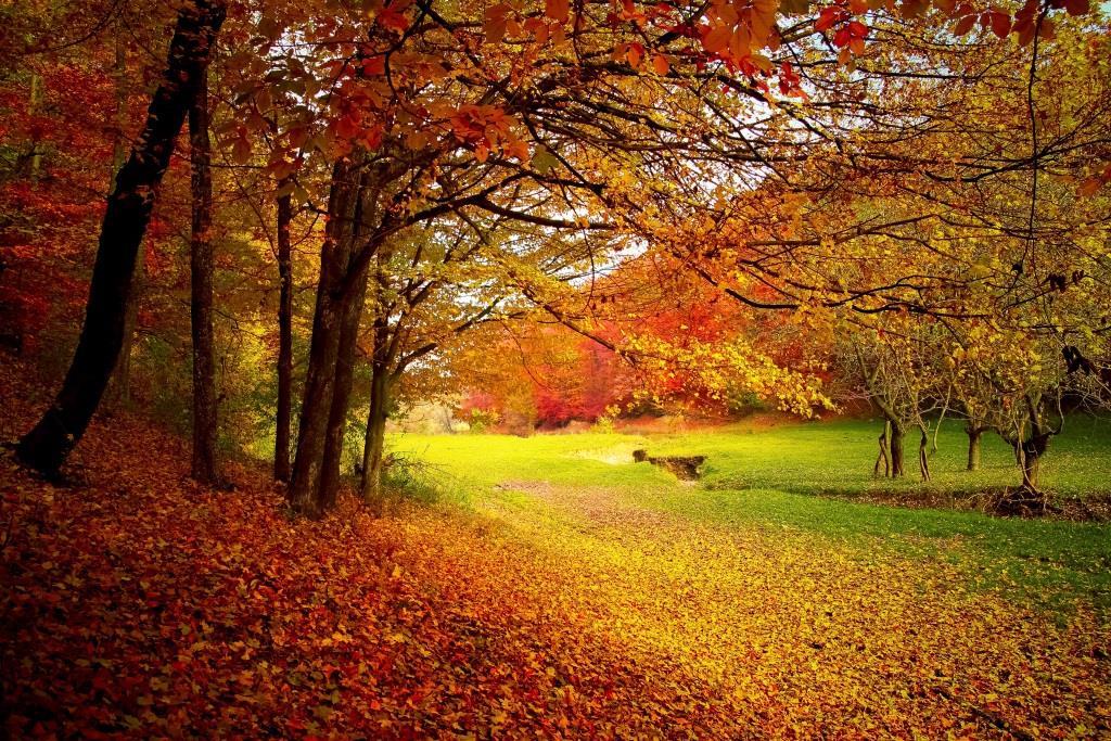 Den Herbst zelebrieren - copyright: pixabay.com