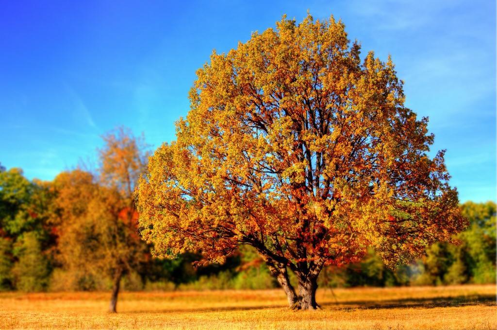 Gewinnen Sie ein Herbst-Genuss-Deluxe-Paket mit CityNEWS - copyright: pixabay.com