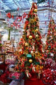 """Bäume, die """"Candybüdchen"""", """"Et Pimpernelle"""" oder """"Is wat mit d´r Oma?"""" heißen. - copyright: Dinger´s Gartencenter Köln"""