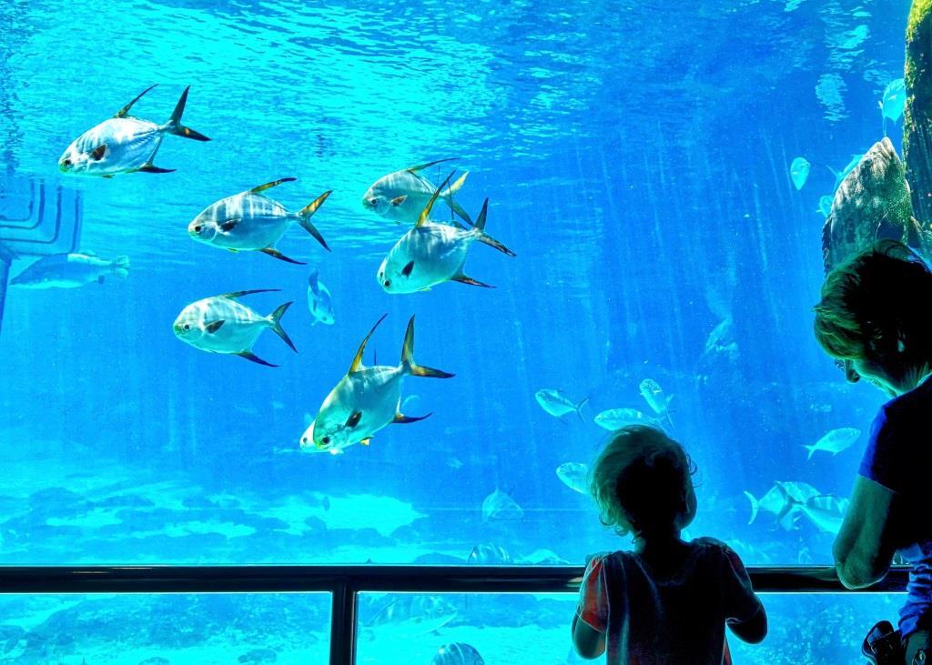 """Tropische Temperaturen statt Herbstkälte und """"tierisch"""" bunte Vielfalt statt Grau in Grau: Die """"Lange Nacht"""" im Aquarium des Kölner Zoos - copyright: pixabay.com"""