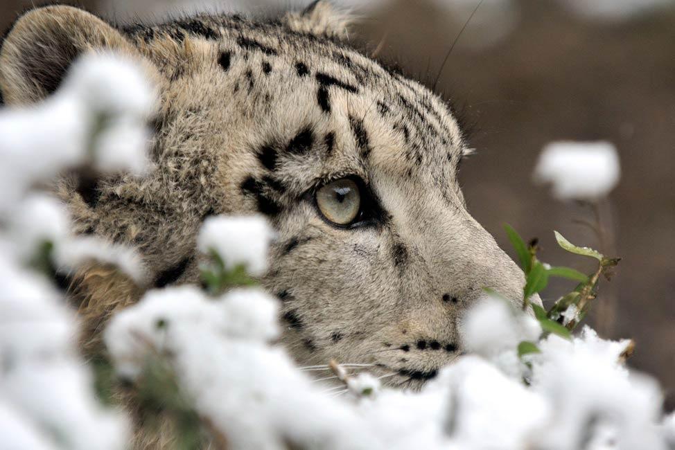 Kinder haben an Weihnachten freien Eintritt in den Kölner Zoo copyright: Kölner Zoo