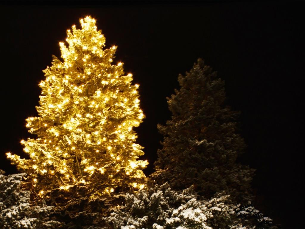 Beleuchtete Weihnachtsbäume in der Kölner City ... - copyright: pixabay.com