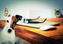 Haustiere fördern die Entwicklung von Kindern copyright: pixabay.com