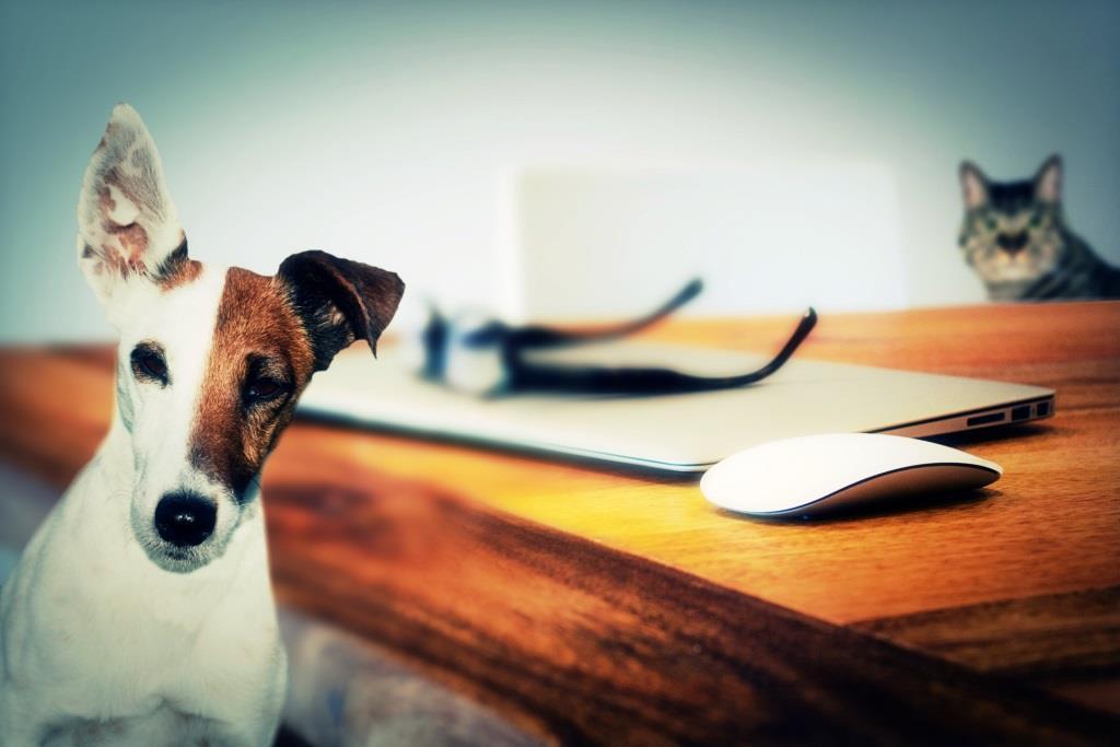 Welches Haustier passt? Alle Infos zu tierischen Mitbewohner! copyright: pixabay.com