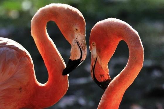 Tour d´ Amour für Verliebte durch den Kölner Zoo - copyright: Kölner Zoo