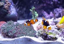 Hobby Aquaristik – oder wie man zu Hause auch entspannen kann - copyright: pixabay.com