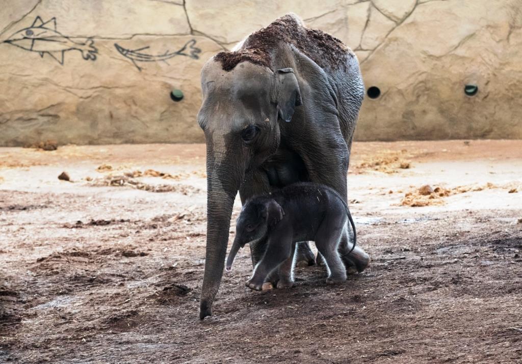 Der kleine Elefant wurde auf den Namen Moma getauft. - copyright: Werner Scheuerer