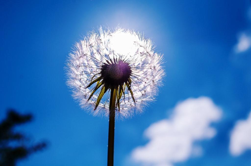Schlafzimmer-Tipps, mit denen Allergiker den Frühling gut überstehen! - copyright: pixabay.com