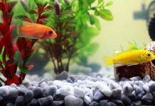 Aquaristik - Ein schwieriges Hobby? - copyright: pixabay.com