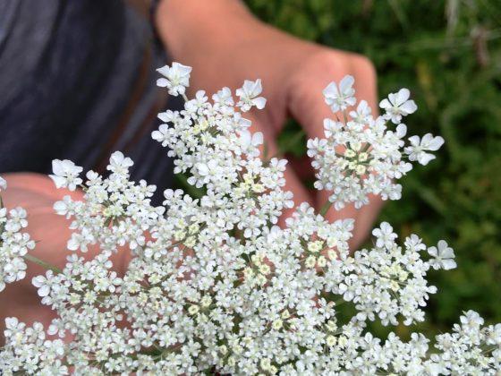 Kräuter mit Heilkraft: Den Frühling schmackhaft erleben! - copyright: Andrea Spang