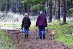 Wanderaktion für Hund und Herrchen zum Thema Zecken und FSME - copyright: pixabay.com