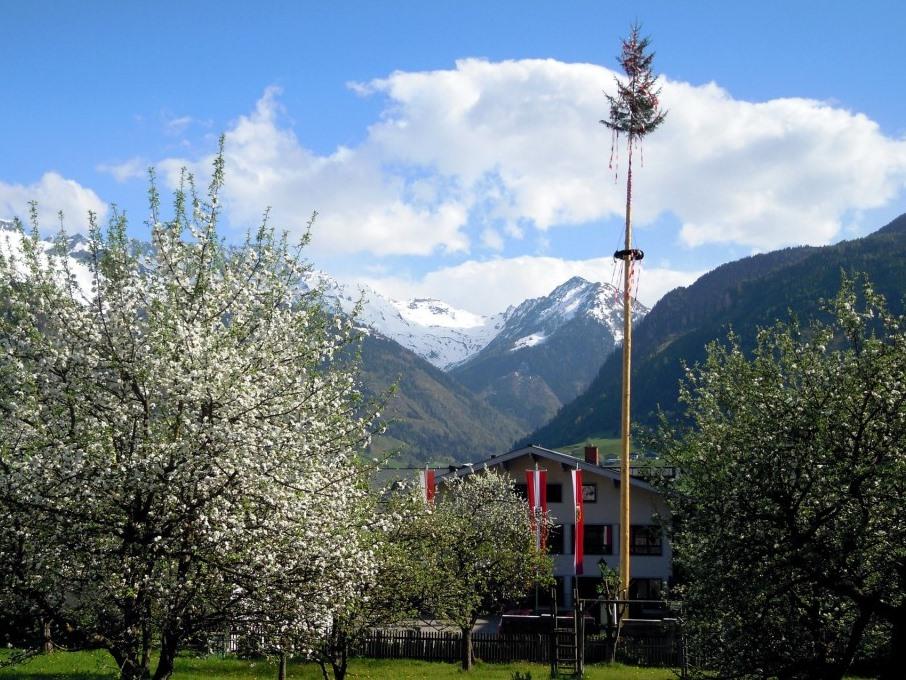 Besonders in Baden-Württemberg, Bayern und Österreich ist das feierliche Aufstellen eines Baumstammes auf dem Dorfplatz üblich. - copyright: pixabay.com