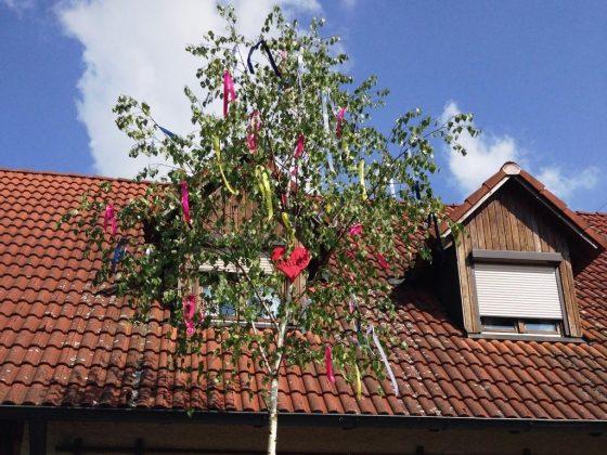 In einigen Teilen Deutschlands ist es üblich, dass männliche Jugendliche am Haus ihrer Angebeteten einen Baum anbringen. - copyright: pixabay.com