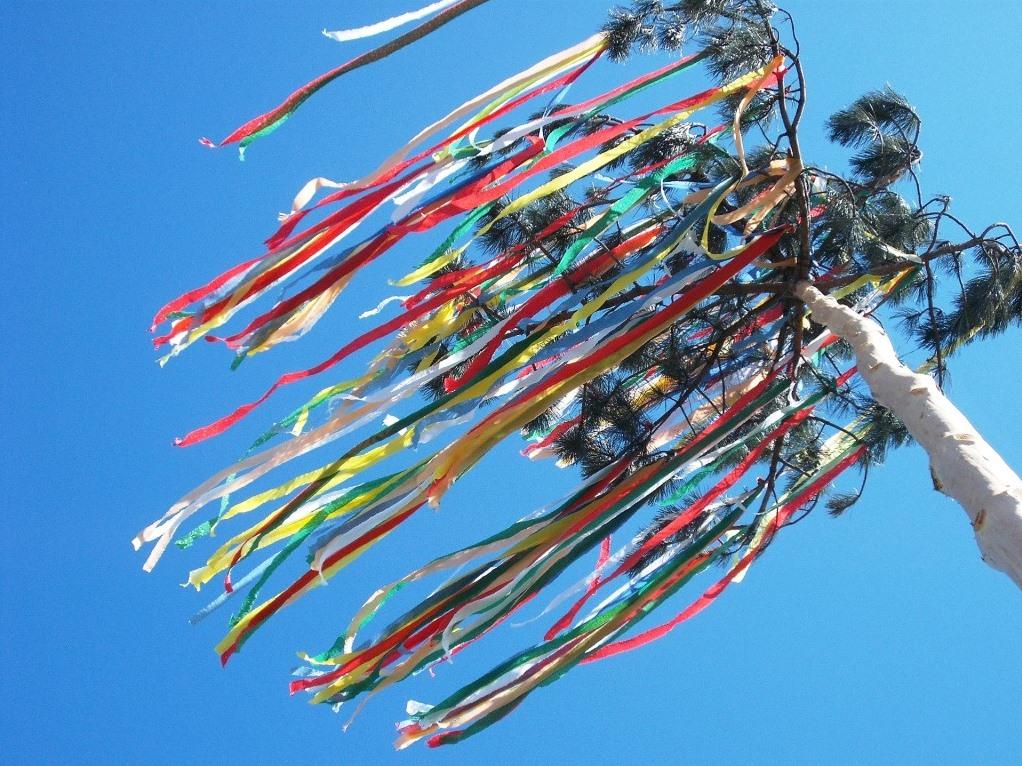 Der Preis für einen drei bis fünf Meter hohen Baum liegt zwischen 15 und 20 Euro. - copyright: pixabay.com