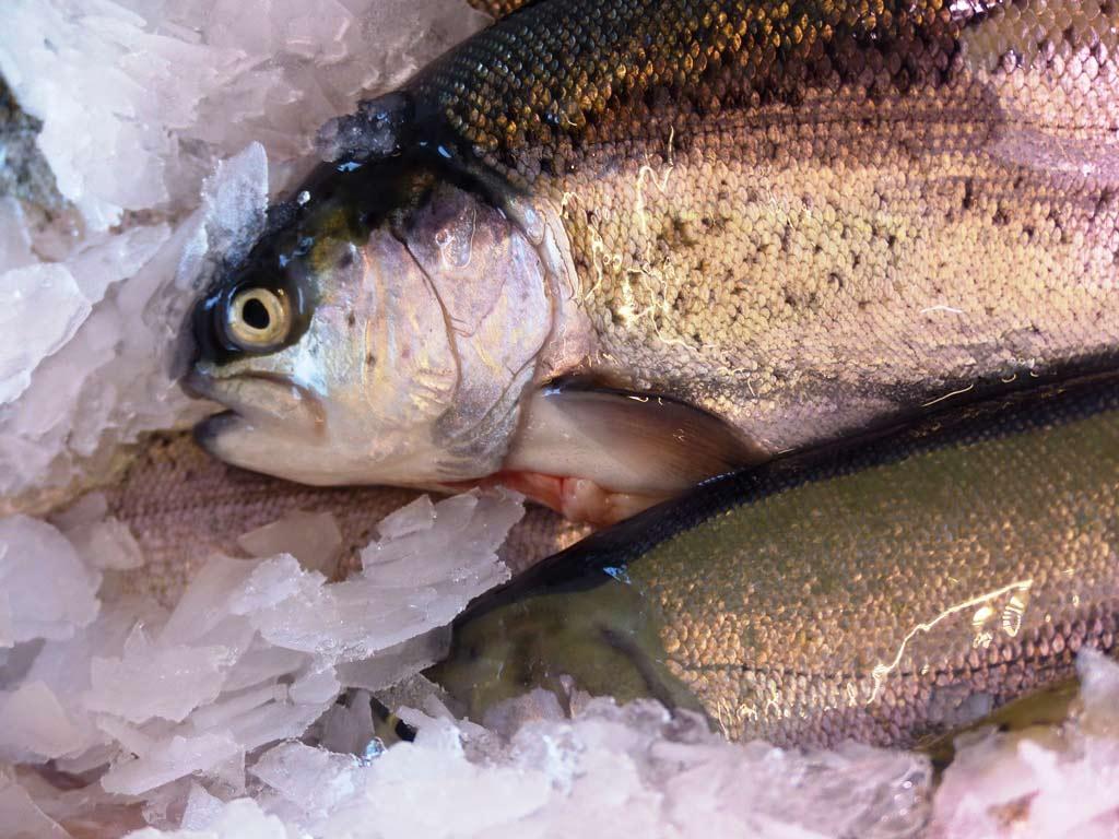 Die weiteren Fischmarkt-Termine 2017 in Köln - copyright: www.rheinlust.de