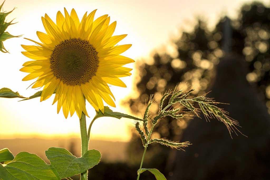 Die Outdoor-Trends für Garten, Balkon und Terrasse 2017 - copyright: pixabay.com