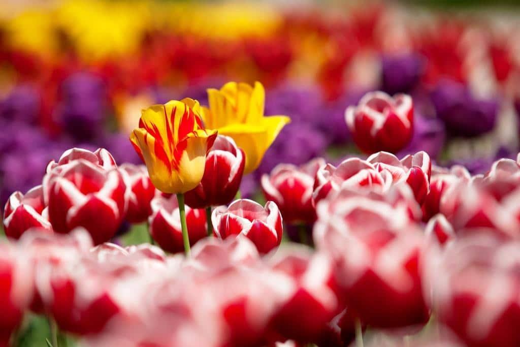Die Trends für Garten, Balkon und Terrasse im Sommer 2017 - copyright: pixabay.com